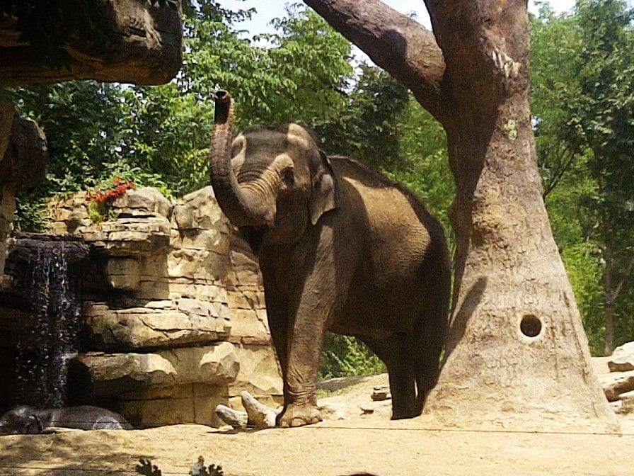 St. Louis Zoo Credit Danielle Breshears