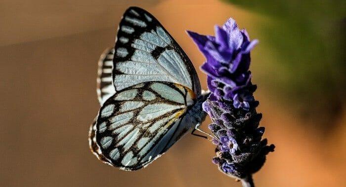 butterfly-374087_1920-700x460
