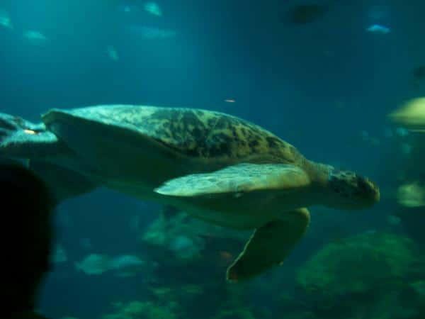 Shedd Aquarium Chicago Credit Danielle Bopp