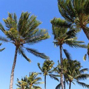 palms-344666_640