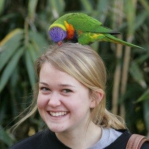 Lorikeet on a girls head