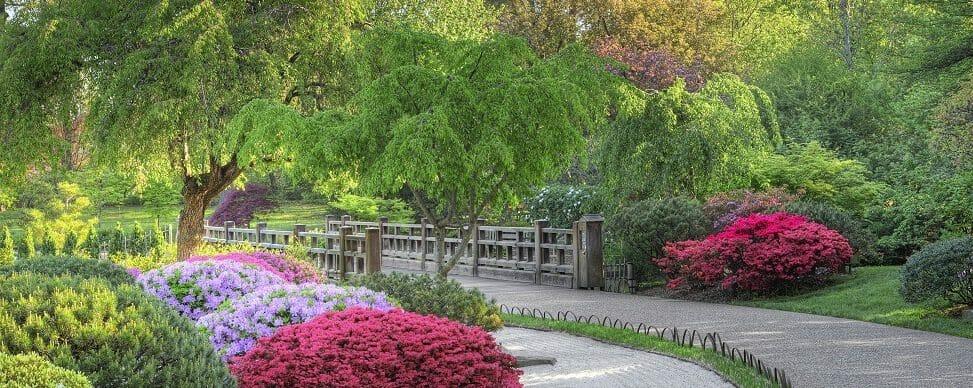 Missouri Botanical Garden Azalea Corner