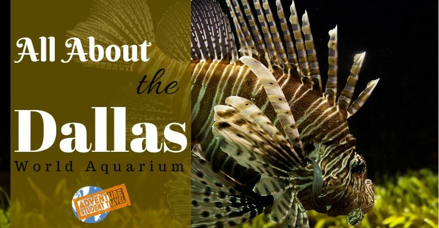 All About The Dallas World Aquarium