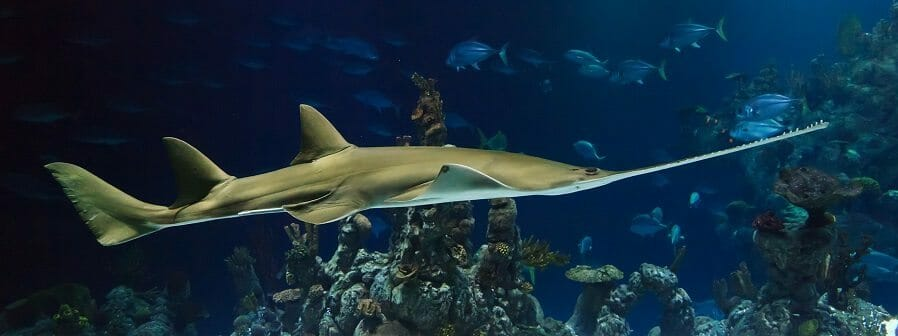Aquarium AST