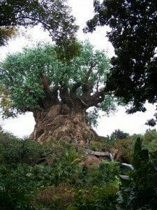 The Animal Kingdom Tree of life educational Tour