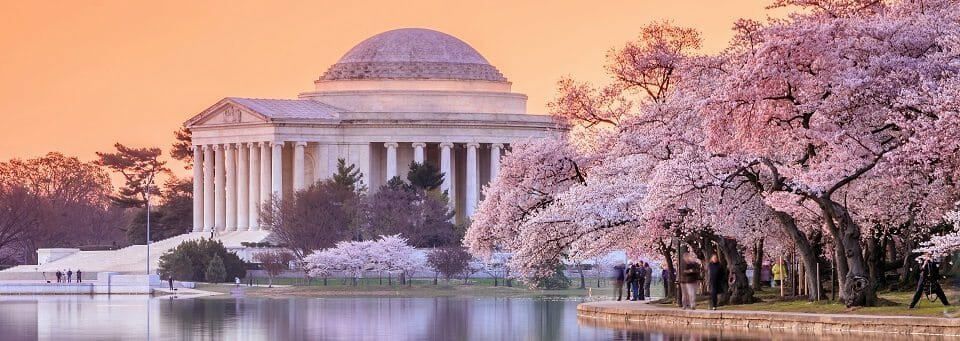 the Jefferson Memorial during the Cherry Blossom Festival. Washington, DC