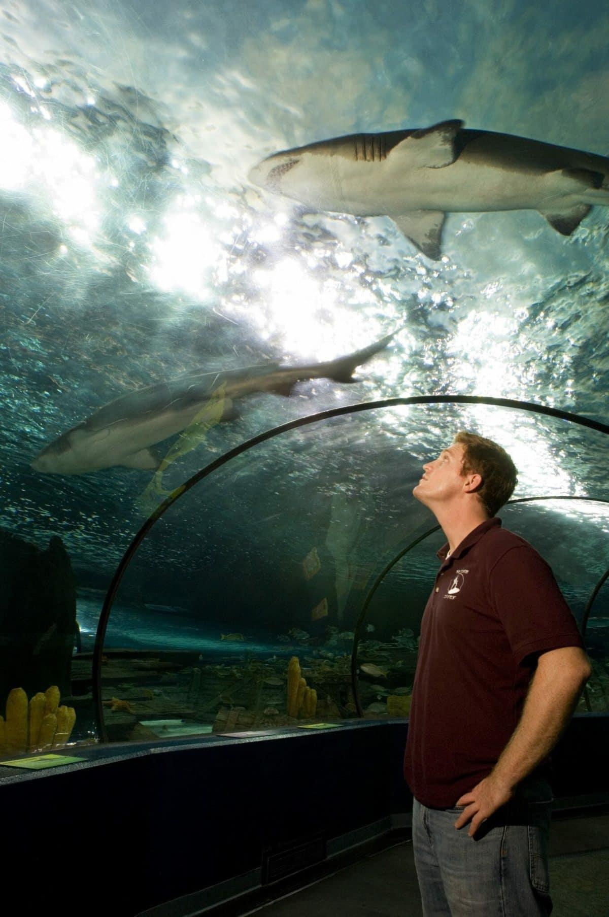 Ripley's Aquarium Myrtle Beach