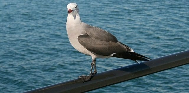 seagull-13355_640