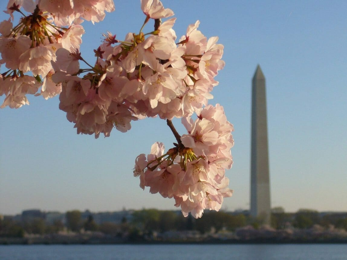 4 Day Washington, D.C. Williamsburg History Tour