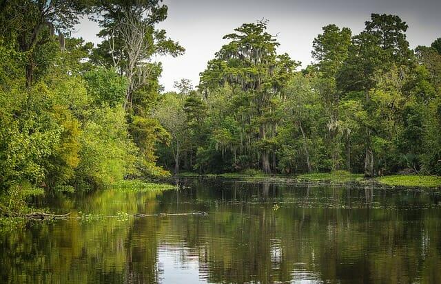 NOLA Swampland