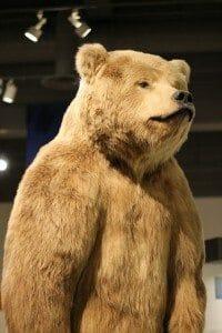 bear-686791_1280
