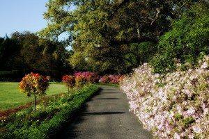 bellingrath-gardens-235447_1280