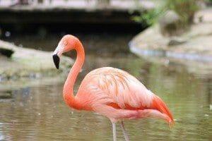 flamingo-672316_1280