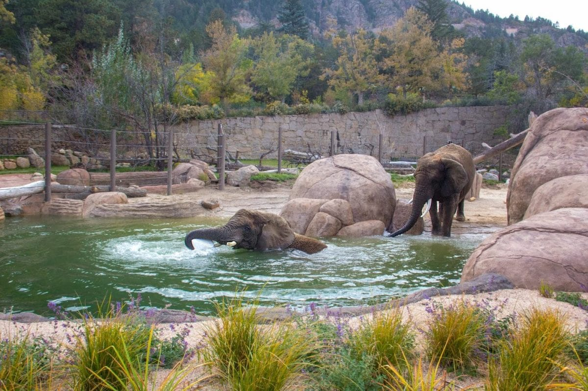 Credit Cheyenne Mountain Zoo