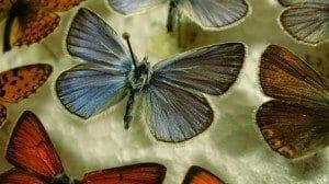 butterfly-522633_1280