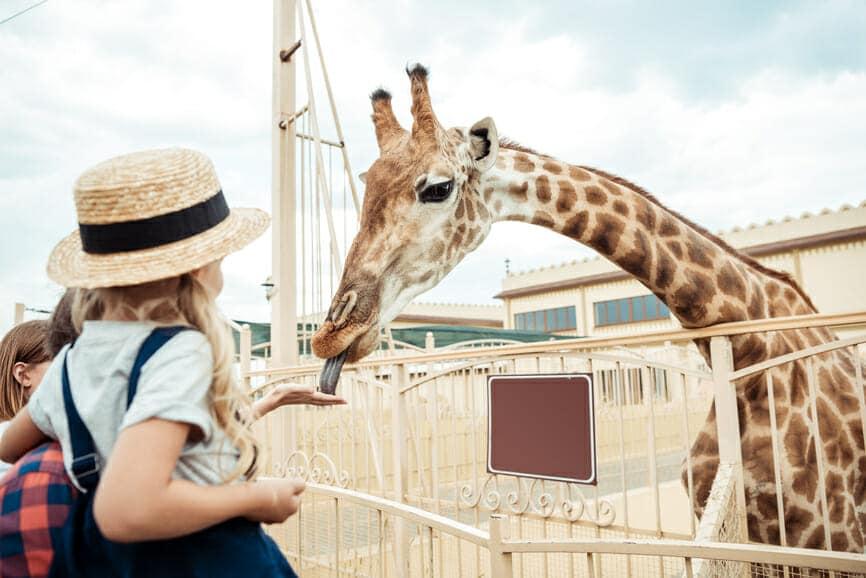 Giraffe at Zoo Stockfresh