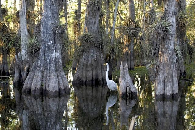 Everglades National Park Pixabay Public Domain