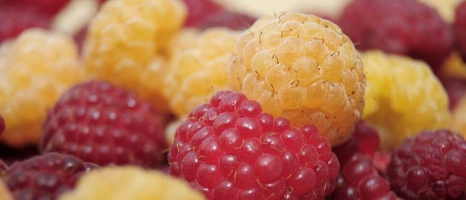 raspberries--u pick farm