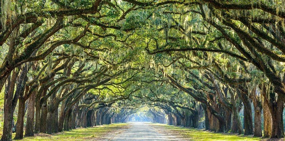 Savannah Educational Tours