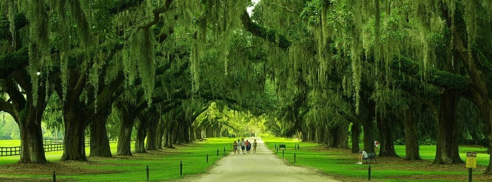 Boone-hall-avenue-of-oaks-sc1