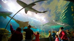 Ripleys-Aquarium-Of-The-Smokies-59357
