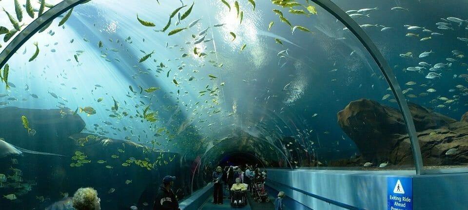 sea life aq