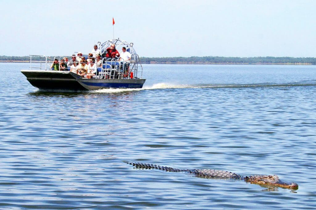 Alligator_sighting_Black_Hammock_Airboat_Rides.
