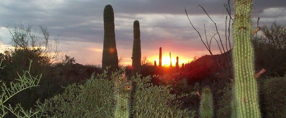 saguarosonora_desert_museum