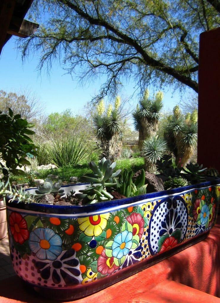 tucson_botanical_gardens