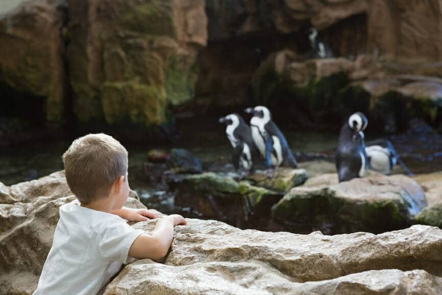 Little boy looking at penguins at the aquarium