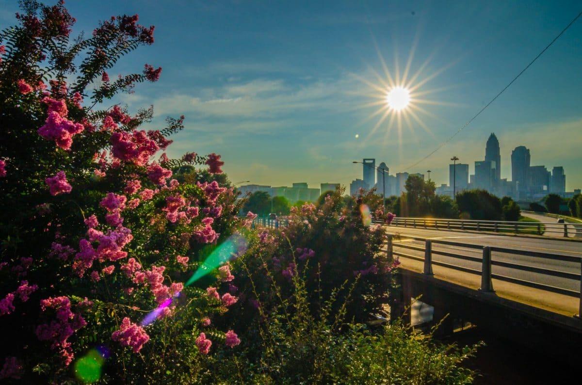1-Day Peak of Charlotte