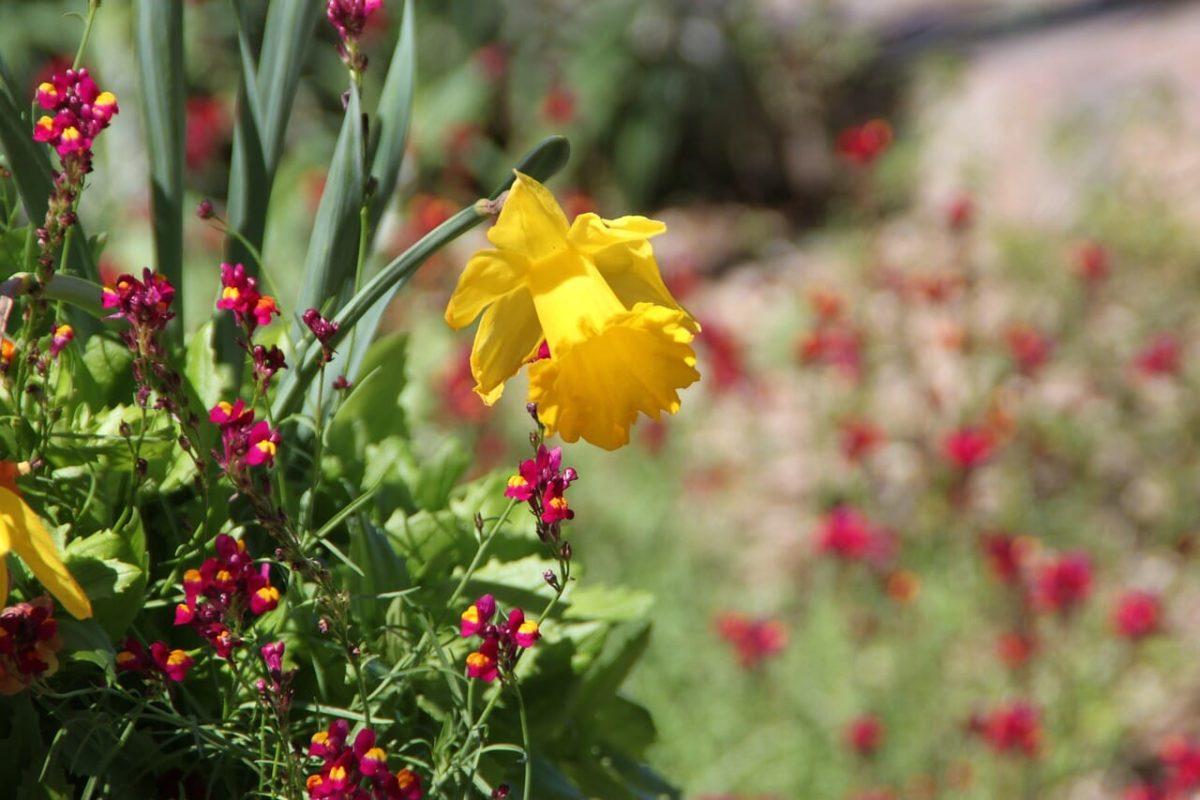 Texas Gardens Pixabay Public Domain