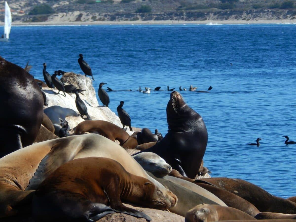 3-Day Monterey Adventure