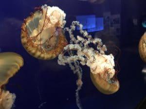 Tennessee Aquarium Pixabay Public Domain