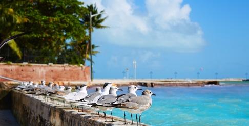 3-Day Florida Keys Road Trip
